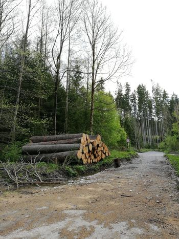 Beauty In Nature Day Deforestation Forest Forestry Industry Heap Large Group Of Objects Log Lumber Industry Nature No People Outdoors Pile Sky Stack Timber Tree Wood - Material Woodpile