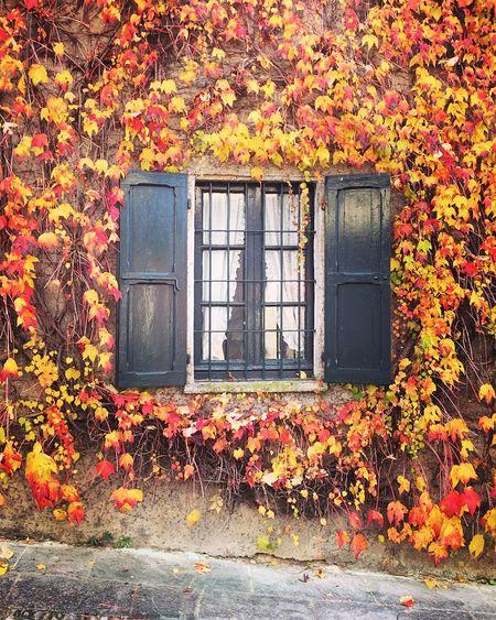 Window season