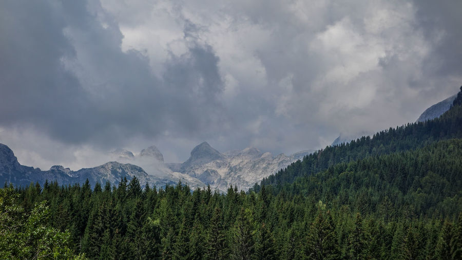 Beautiful Exploring Natural Nature Pure Slovenia Traveling Triglav National Park Alps Beauty In Nature Day Forest Landscape Mountain Nature No People Outdoors Peaceful Pine Tree Range Scenery Scenics Sky Tree