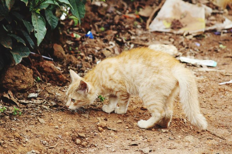 Cute Cross Persian Kitten In Search Of Food..!!! Travel pics from Ooty, Tamil Nadu, India