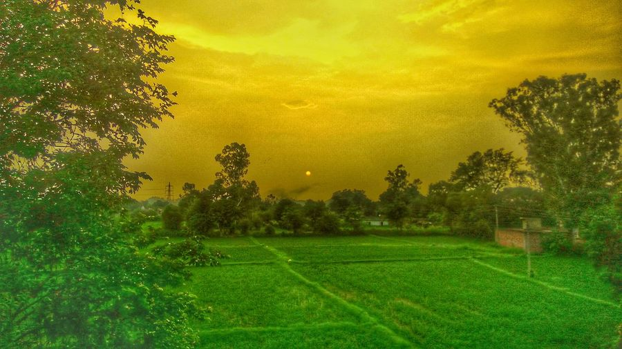 Farm house Tree Green Color Beauty In Nature Agriculture Nature Growth Field Rural Scene Scenics Grass Yellow Sunset Landscape No People Outdoors Sky Day Tea Crop Freshness Sun Travel Photography Roads Highway Tree Area Beauty In Nature