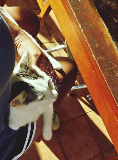 Afternoon pettings are her favorite. Animals Catlovers Cat Catsoftheworld Pet Petlover Catpictures Catpic Cats