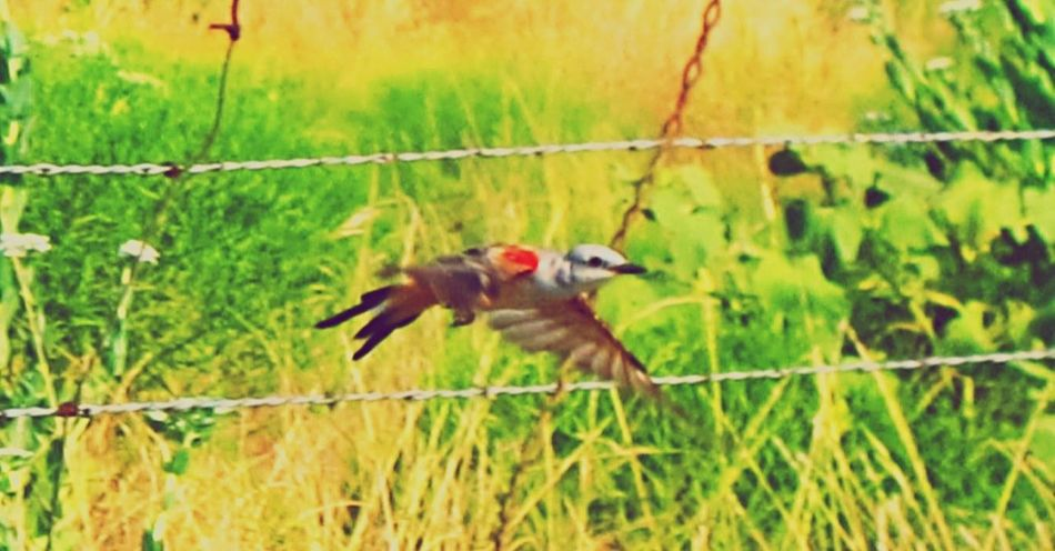 Animals In The Wild Wildlife Bird Blurred Motion Selective Focus Wings Spread Flight TakeOff Poisoned_pics_photography country Country Road Resist