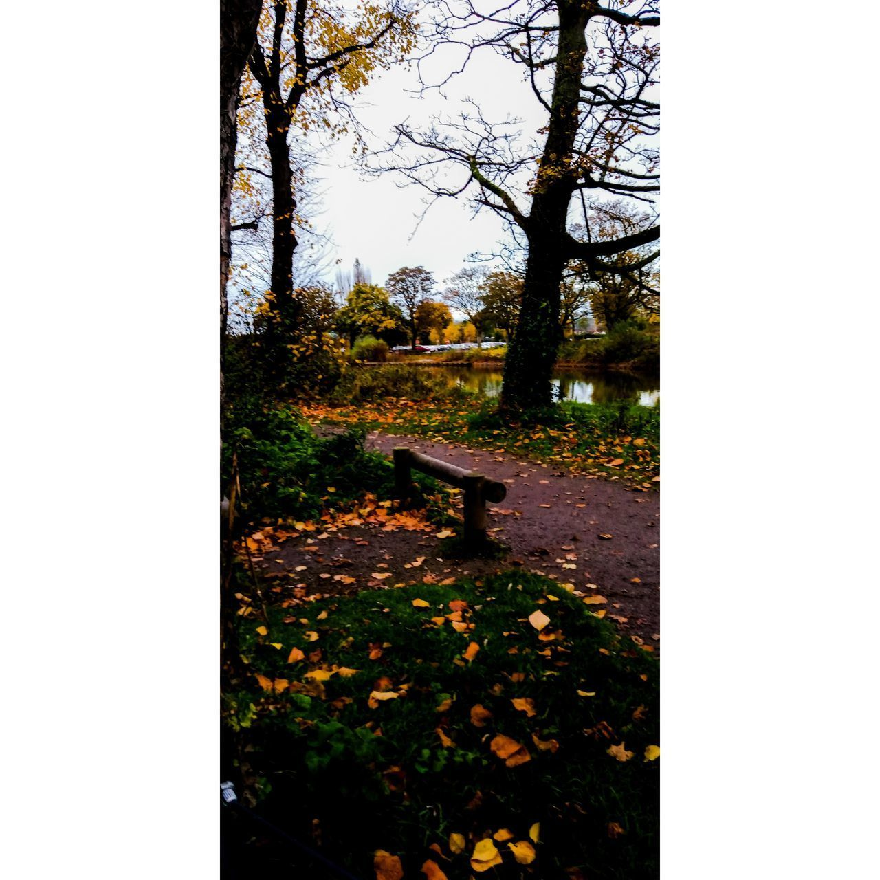 plant, tree, nature, growth, no people, beauty in nature, sky, tranquility, day, park, tranquil scene, flower, land, outdoors, field, flowering plant, landscape, autumn, tree trunk, scenics - nature, change