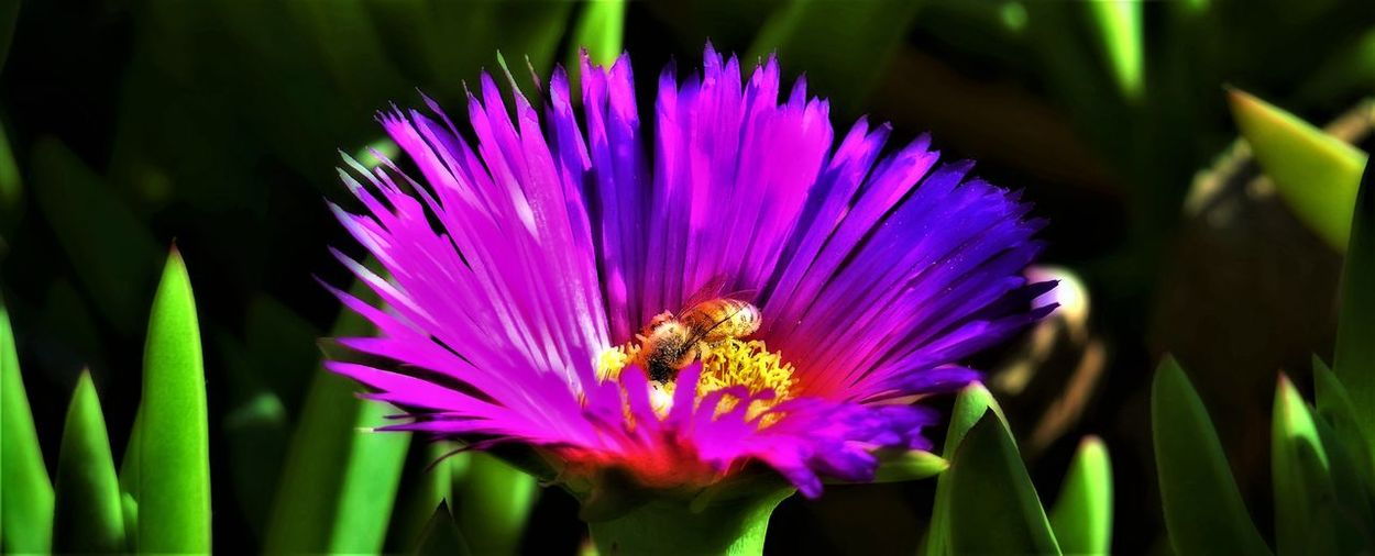 Close-up of bee on purple flower blooming outdoors