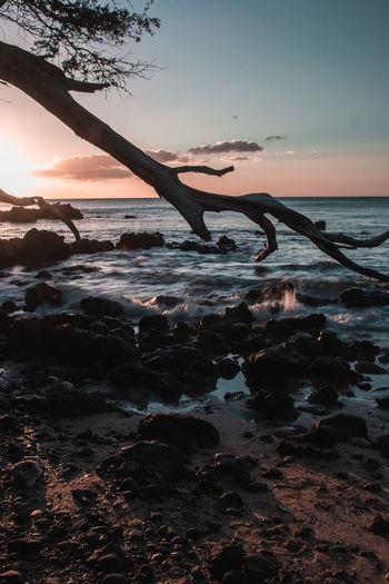 Beach Days. Nature Outdoors Hawaii Trees Ocean Sunset Colorful Beach Freedom Peace Rock Lava Long Exposure Blue Landscape Puako Big Island Pacific Ocean Kona