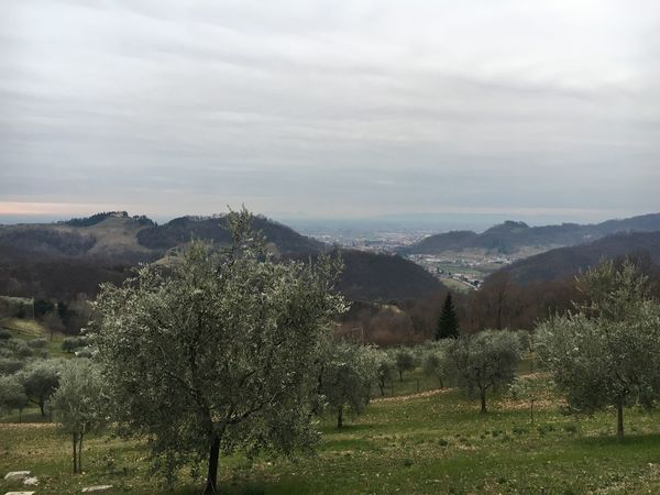 Ravano panorama. 6 february 2018 Tree Nature Beauty In Nature Tranquility Field Landscape No People
