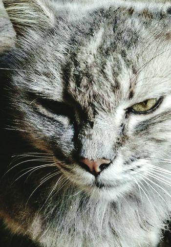 Cat Cats Of EyeEm Cat♡ Cats