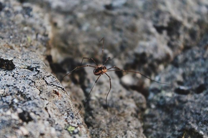 Spider Insect Animal Themes Close-up One Animal Animals In The Wild Animal Wildlife Rock - Object Outdoors Day Spider Nature No People Animal Zoology Animal Head  Focus On Foreground Selective Focus Nature Beauty In Nature Mammal Majestic Front View Growth Pets Field