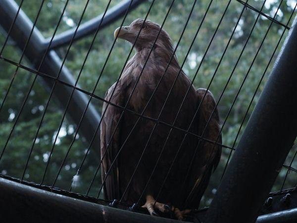 Falcon Animal_collection Taking Photos Zoo Zoo Animals  Animals Bird Animal Animal Photography Bird Photography