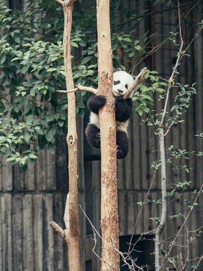 Baby Panda Help Scary Scared Day Plant Tree No People Built Structure Nature Outdoors Architecture Green Color Growth Metal Old Sunlight Window Branch Boundary Fence Plant Part Leaf Barrier