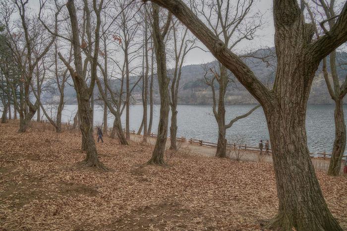 Dreamy Forest Forest Forestwalk Nami Island South Korea
