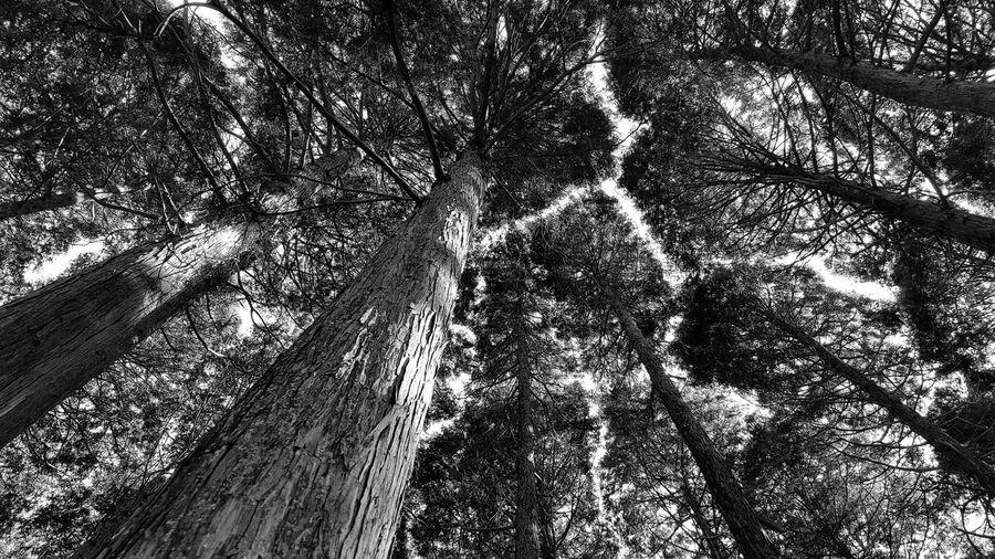 広島 Hiroshima Japan Forest Forest Photography Japan Photography Japan Blackandwhite Blackandwhite Photography Norosan のろさん Noro-san 日本 野呂山