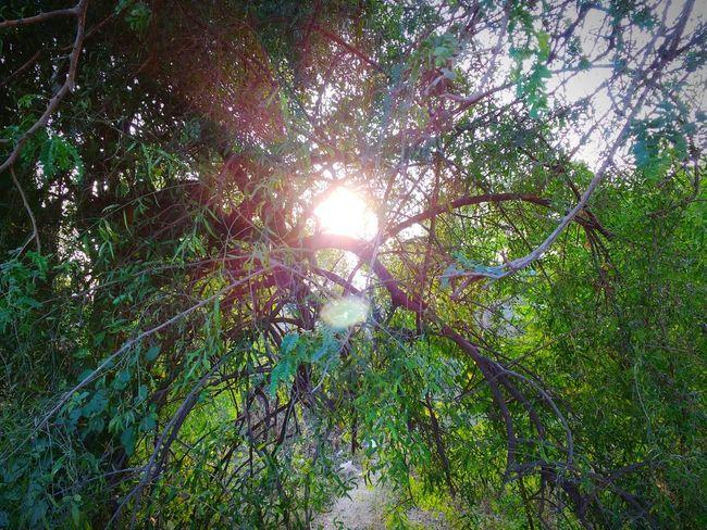 Scenery 01 Nature Beautiful Nature Tree Sun Sun Sparkle Sun Rays November