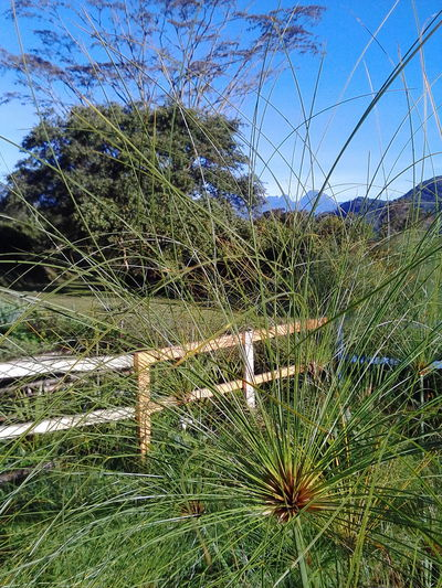 Nature Growth No People Grass Day Outdoors Backgrounds Close-up Beauty In Nature Fragility Sky Freshness