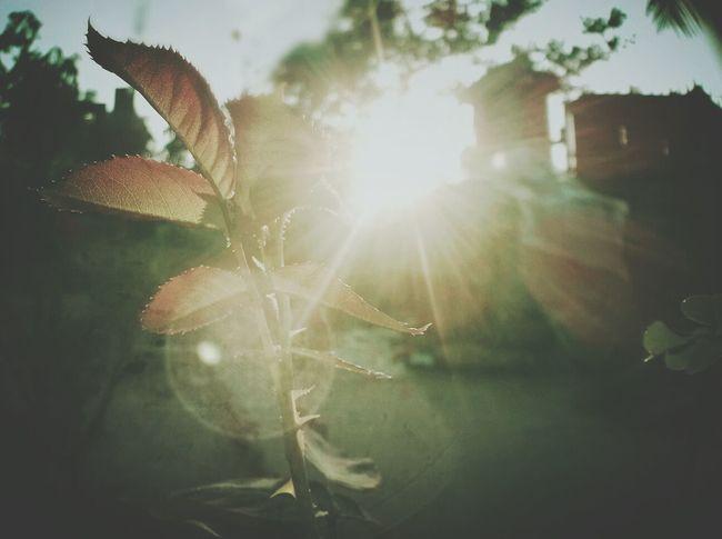 Good Morning Sun Light Hawthorn Hanging Out