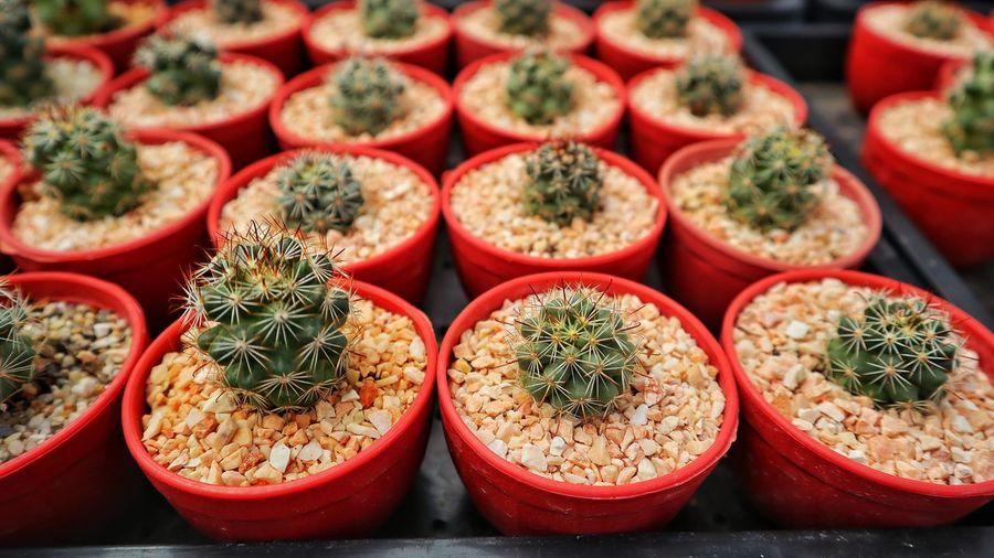 Full frame shot of succulent plants at nursery