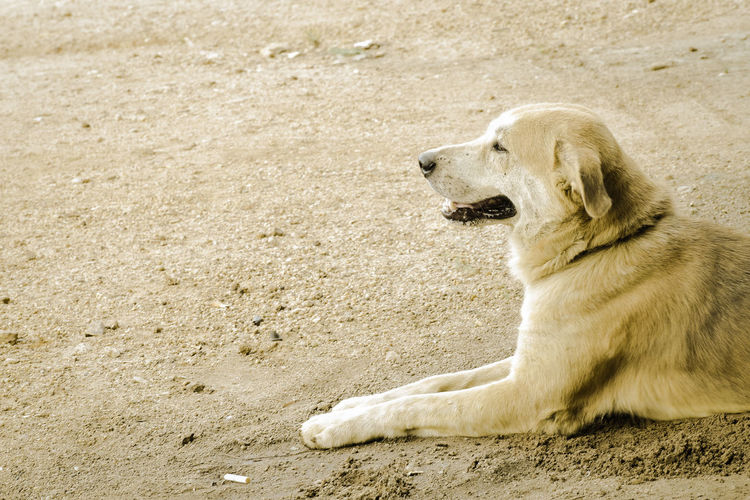 Dog relaxing on sand
