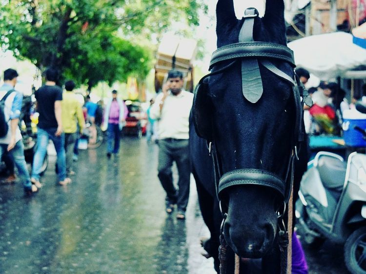 Black beauty on the streets of Old Delhi, India. Outdoors Horse Photography  Horse Photography Photos Around You Black Love First Eyeem Photo City Adults Only One Person People Day Adult EyeEmNewHere