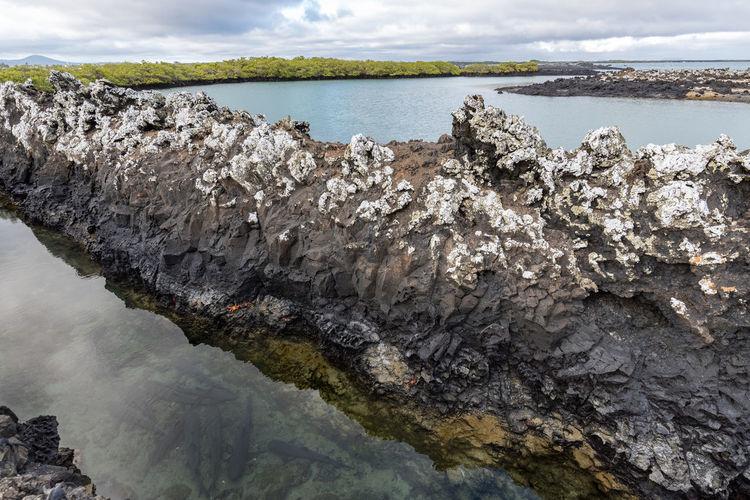 South America Ecuador Galapagos Islands Galapagos Marine Life Sealife Rock Formation Lava Formations Lava Island Shark Water Sea Nature Cloud - Sky Beach Sky Day Outdoors Beauty In Nature Horizon Over Water UnderSea