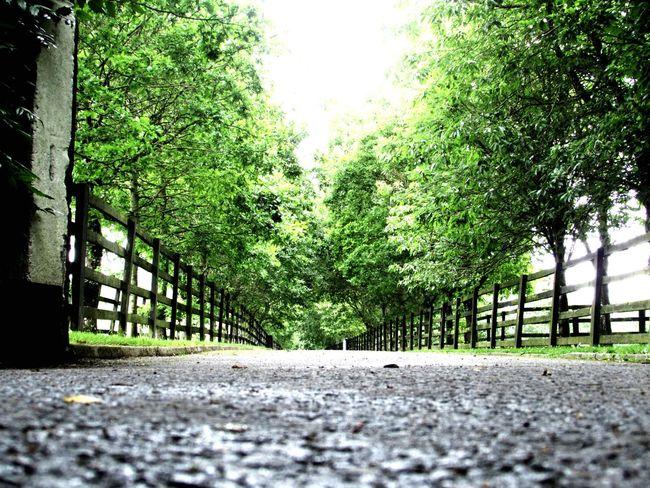 Nature On Your Doorstep Roadlesstravelled