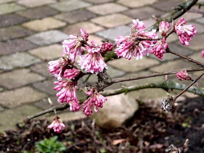 On My Way To Work Frühling😍 For My Friends 😍😘🎁 Stormy Weather ☔ Beauty In Nature Nature Flower Close-up Springtime Frühlingserwachen Blossom Color Your Life! Beauty In Nature Fragility Pink Color Bad Weather Good Mood Colors Of My Life