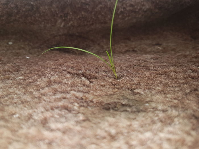 we have sprouted on the balcony Growth Plant Nature No People Science Sand Close-up