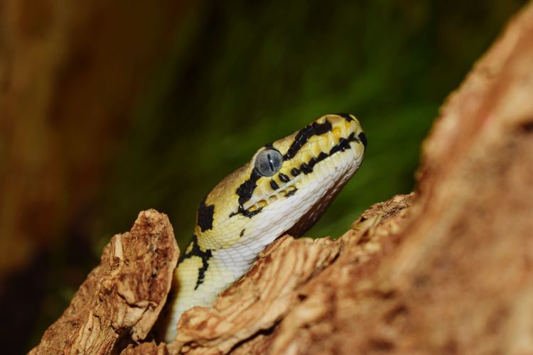 Close-up of a snake