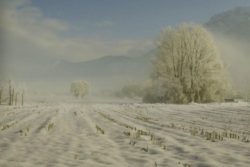 Snow Agriculture Tree Landscape Fog Cold Temperature Nature Rural Scene Winter