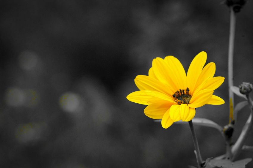 Minimal_shot Minimal_perfection Minimalobsession Yellow Flower Yellowmagic Walking Around Autumn 2015 Popular Photo Nature_ Collection  Nature Textures