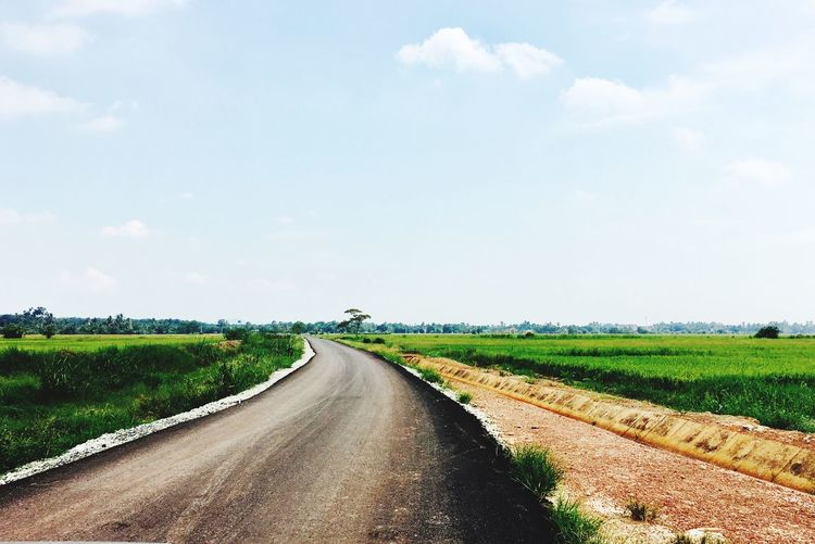paddy Grass Sky Nature Agriculture Field No People road Outdoors