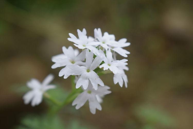 flower is