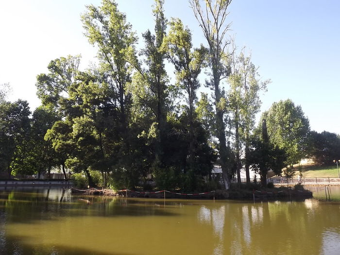 Beauty In Nature Calm Clear Sky Day Green Color Lake Lakeside Nature Non-urban Scene Park Reflection Scenics Sky Tranquil Scene Tranquility Tree Water No Filter, No Edit, Just Photography