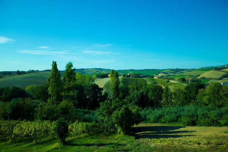 Landscapes in Montecchio, Italy The Week On EyeEm Beauty In Nature Blue Clear Sky Day Field Golf Golf Course Grass Green - Golf Course Green Color Landscape Nature No People Outdoors Scenics Sky Tranquil Scene Tree