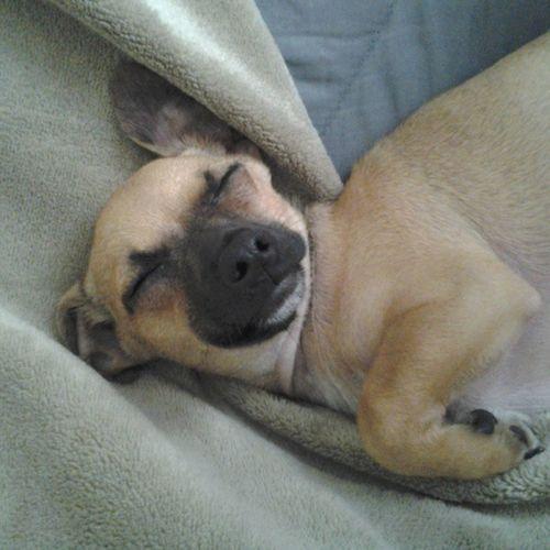 Nelson, wake up you sleepy ass...Cx Sleepynelson Wakeupdog Thinkingaboutme ?Cx Lillazzyass