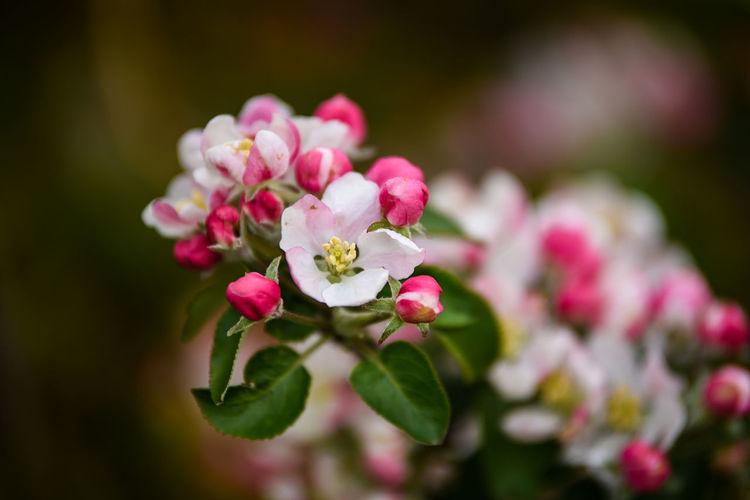 Flower Floewers