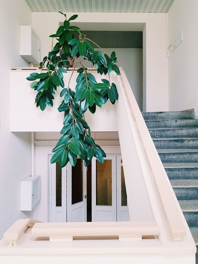 Potted plant on staircase against building
