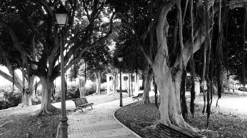 Tree Day Outdoors No People Sunlight Shadow Nature Architecture Sky Arroyo De La Miel Benalmádena, Malaga, Spain Nature Park Bench Park Life Tree Lamp Roots Roots Of Tree Black & White Black And White Blackandwhite Photography