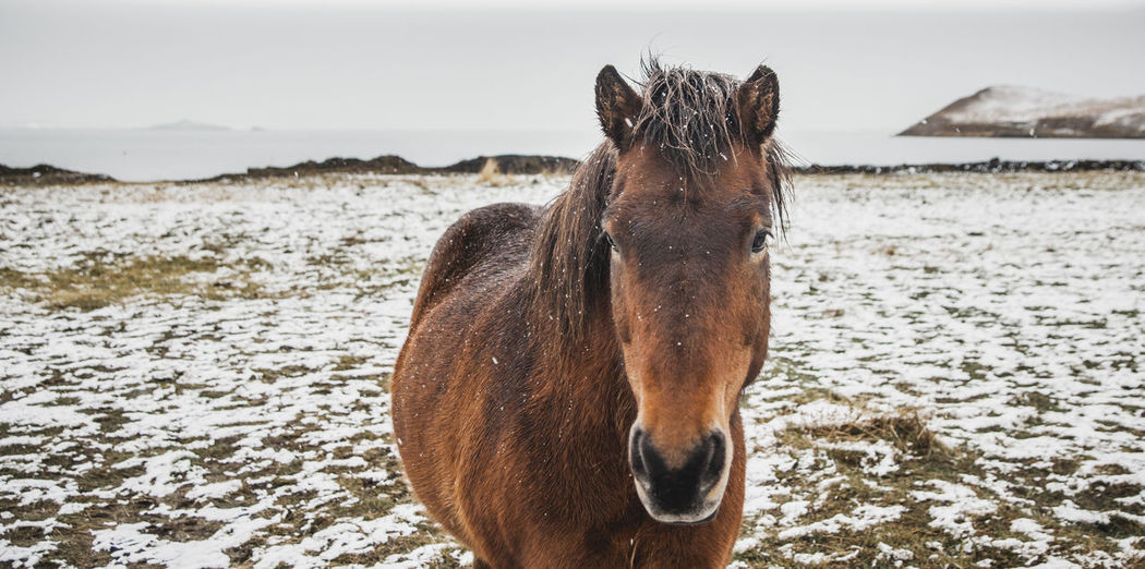 Close-up of a horse on the beach