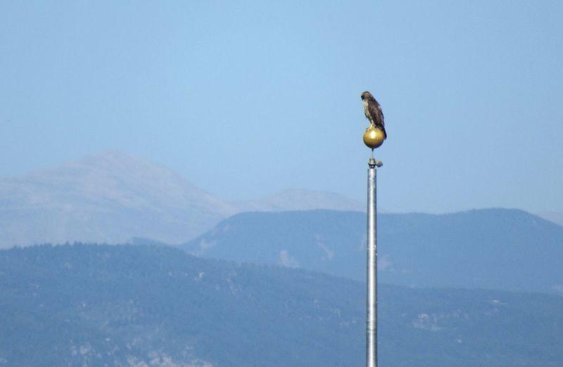 Bird on mountain range against clear sky