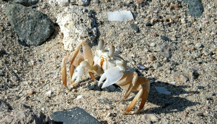 Africa Nature Egypt Crab Crab On The Beach EyeEmNewHere Sommergefühle