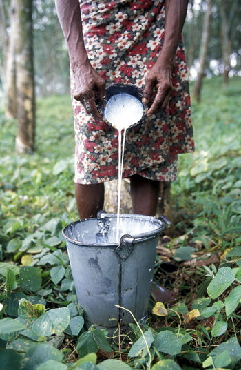 Midsection of woman pouring latex in bucket from coconut shell
