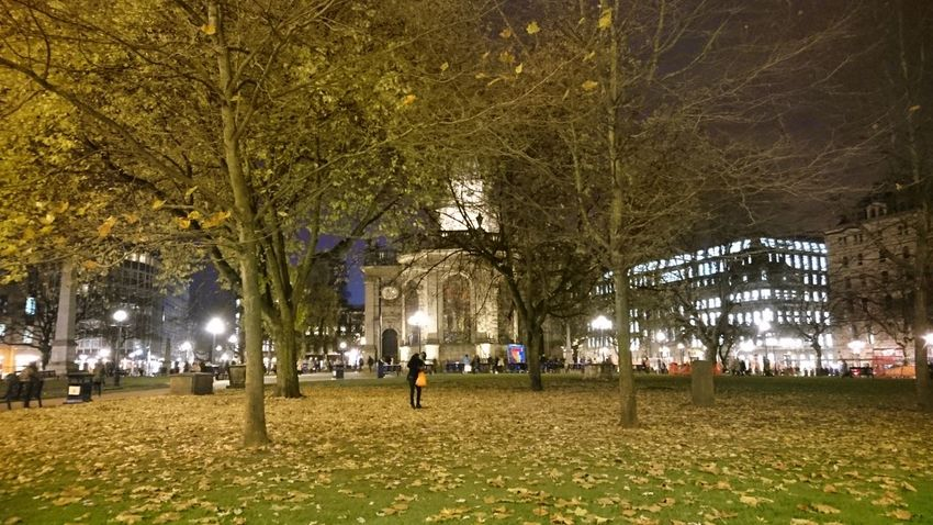 Tree Park - Man Made Space Night Outdoors City People Nature Church Cathedral Offices Artificial Light Birmingham UK Birmingham St Philips Cathedral