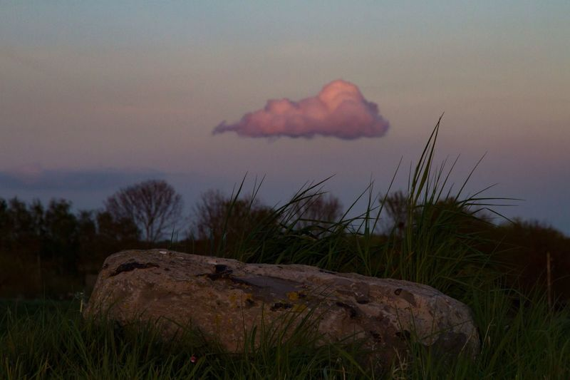 One stone, one cloud... Nature No People Outdoors Sky Beauty In Nature Landscape Grass Scenics Day Tree Stone