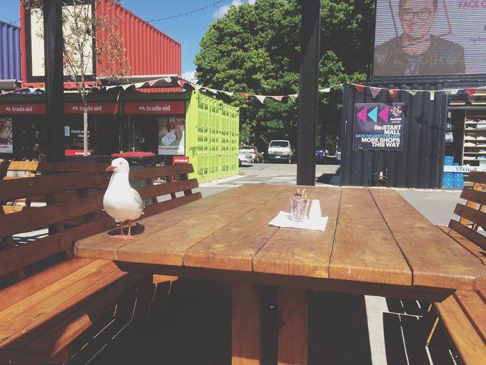 Seagull On Table Seagull