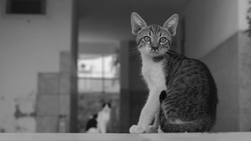 Street Photography Outdoors EyeEm Selects Mammal Animal Themes Animal Pets Domestic Cat Domestic Cat Domestic Animals Feline Focus On Foreground Portrait Looking At Camera No People Sitting