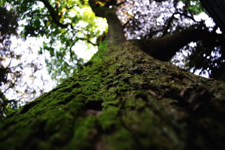 Perspectives On Nature Nature Tree Low Angle View Moss Beauty In Nature Tranquility No People Forest Rock - Object Outdoors Tree Trunk Day Growth Branch Close-up Freshness Sky Fragility 奥行きシンドローム