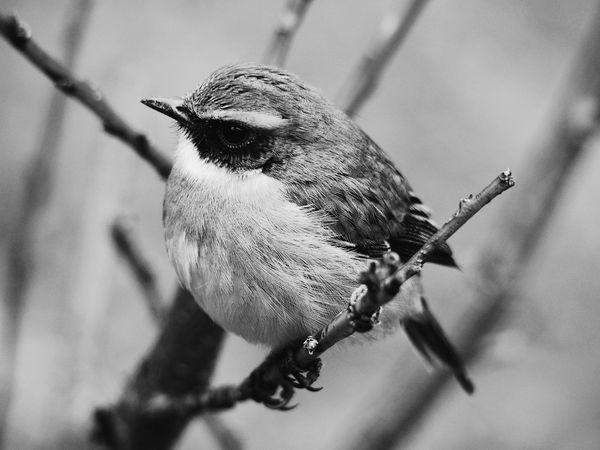 Bnw_birds Bnw_friday_eyeemchallenge