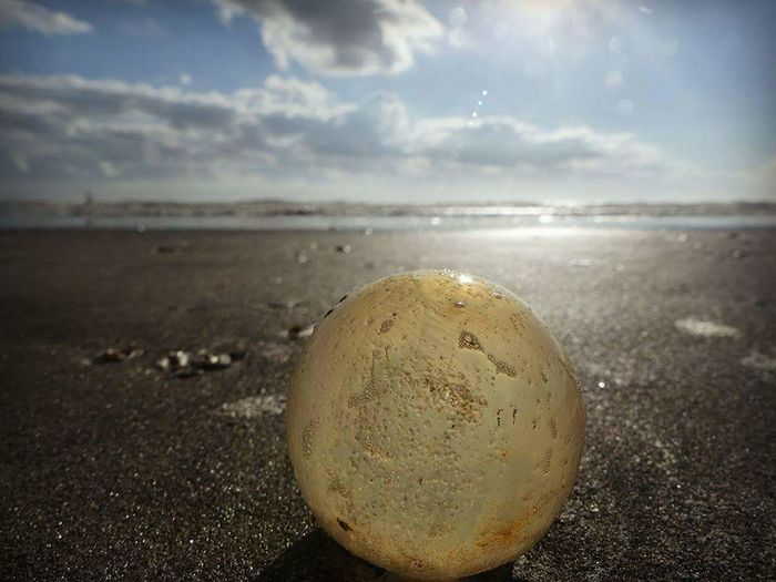 """Coccon"" - ""Sea turtle egg"" Nature Beach Cloud - Sky Sky Water Beauty In Nature Outdoors Sphere Sea Sand Horizon Over Water Turtle 🐢 Seaturtle Seaturtlesanctuary Seaturtlerehab SeaTurtlesConservationCenter Seaturtles Eggs... Eggs Art Eggplant🍆"