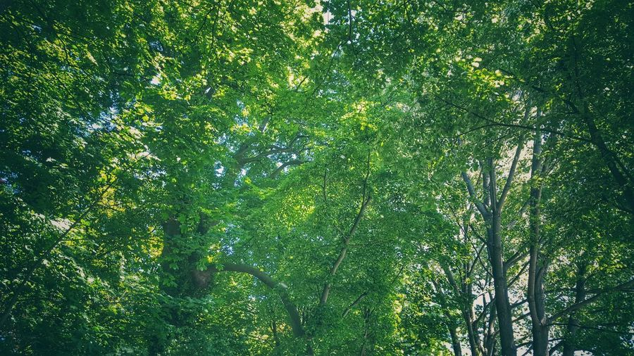 Vintage Green Color Growth Nature Tree Beauty In Nature Low Angle View Day Full Frame No People Backgrounds Outdoors Lush Foliage Branch Leaf Tranquility Forest Plant